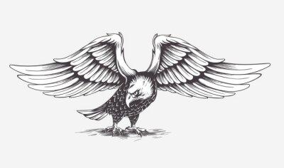 Bild Detaillierte handgezeichnete Adler. Vector.