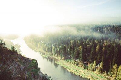 Bild Dicke Morgennebel im Nadelwald. Nadelbäume, Dickicht des grünen Waldes.