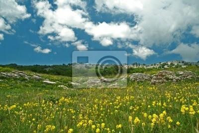 Die Alpine Wiese
