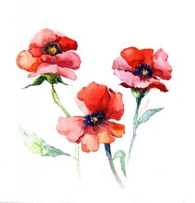 Bild die Frühlingsblumen Mohn Malerei Aquarell isoliert auf den weißen Hintergrund