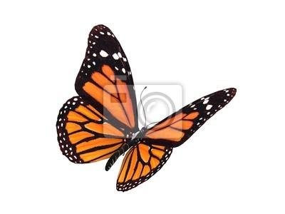 Bild digitale Render eines Monarch-Schmetterling