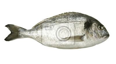 Bild Dorado Fisch isoliert auf weißem Hintergrund