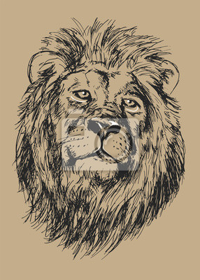 drawing lion's head - vector illustration