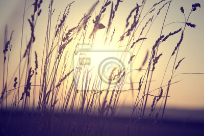 Dreamy goldene Farbe verschwommen Landschaft Wiese bei Sonnenuntergang mit Sonne Hintergrund. Selektiven Fokus verwendet.
