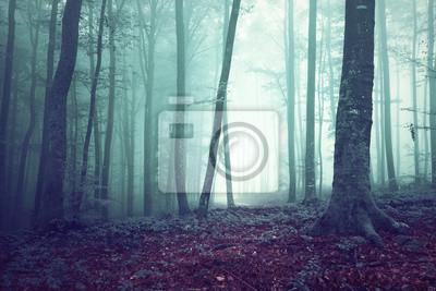 Dreamy grün und blau gefärbt nebligen Wald Baum Hintergrund. Fantasie farbigen Wald. Farbfilter-Effekt verwendet.