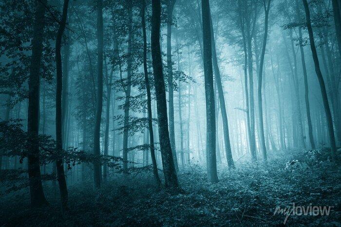 Bild Dreamy mystische blaue Farbe nebligen Wald