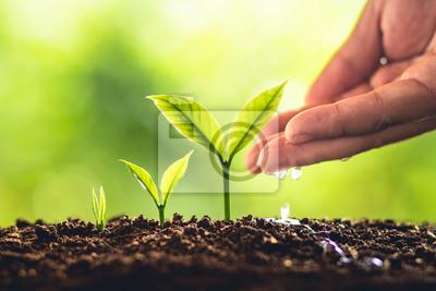 Bild Drei Schritte des Baum-Wachstums in der Natur und in der schönen Morgenbeleuchtung