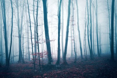 Dunkel blaues Rot der Fantasie färbte nebelige Waldbaumlandschaft. Farbfiltereffekt verwendet.