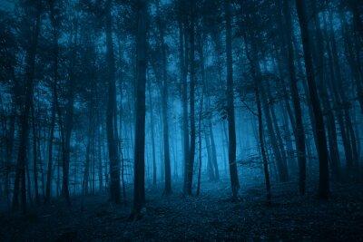 Dunkelblaue farbige gespenstische Waldbaumlandschaft. Blauer Farbfilter-Effekt verwendet.