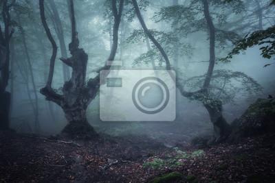 Dunklen Herbst Wald im Nebel. Schöne natürliche Landschaft.