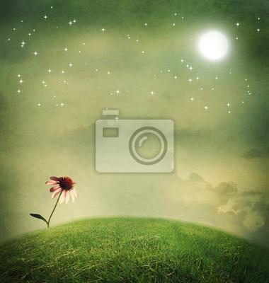 Ein Echinacea-Blume unter dem Mond