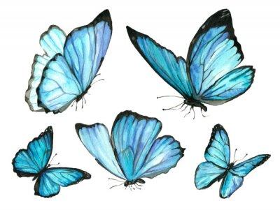 Bild Ein Set blauer Aquarellschmetterling