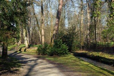 Bild Ein Weg und ein kleiner Bach im Wald
