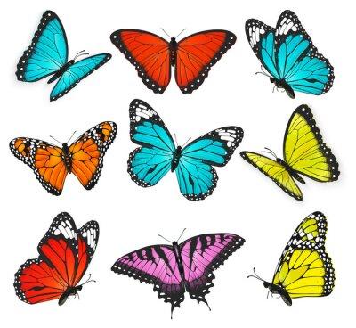 Bild eine Reihe von realistischen bunten Schmetterlingen Illustration