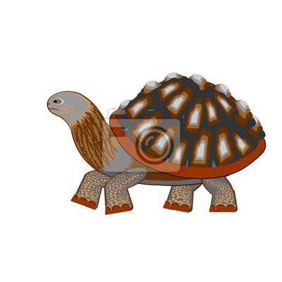 Eine Schildkröte auf einem weißen Hintergrund
