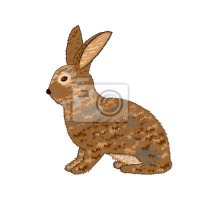 Eine Seitenansicht eines Kaninchens auf weißem Hintergrund