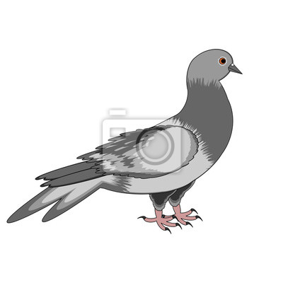 Eine Taube auf einem weißen Hintergrund