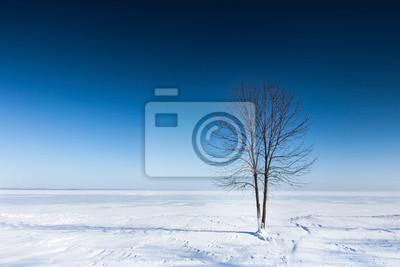 Einsamer Baum auf einer Ebene mit Schnee bedeckt