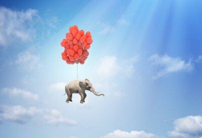 Bild Elefant mit Luftballons