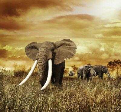 Bild Elefanten bei Sonnenuntergang