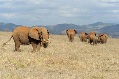Bild Elefanten im Nationalpark von Kenia
