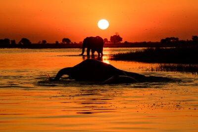 Bild Elefanten Sonnenuntergang