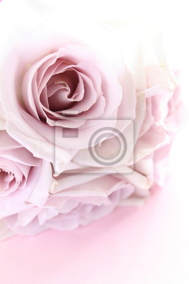 Eleganten Pastell Lila Rosen Bouquet Für Hintergrundbild