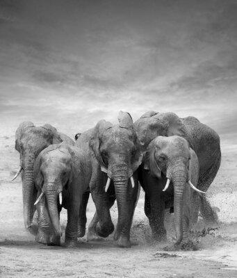 Bild Elephant