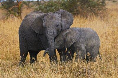 Bild Elephant brothers