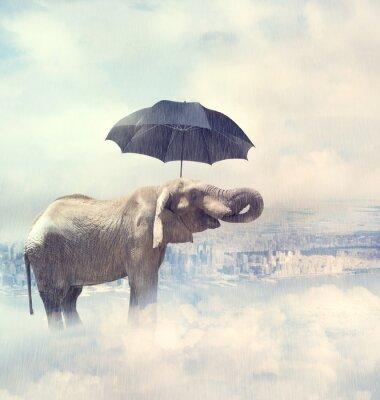 Bild Elephant genießen regen avobe die Stadt in den Wolken