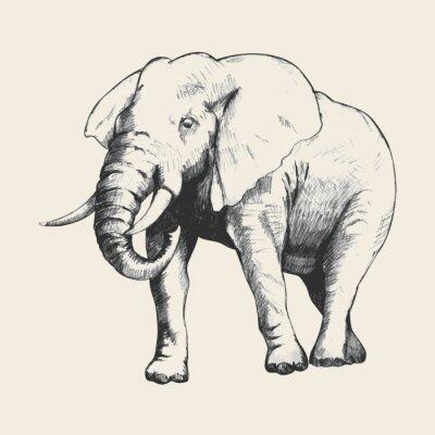 Bild Elephant Sketch