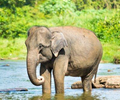 Bild Elephatnt