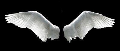 Engel Flügel isoliert auf dem schwarzen Hintergrund