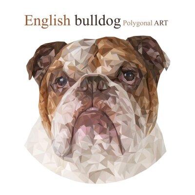 Bild Englische Bulldogge. Polygonale Zeichnung ..