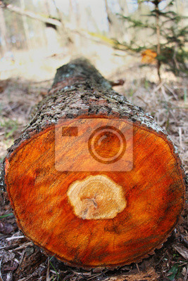 Erle Holz Leinwandbilder Bilder Rechnung Erle Rohstoff Myloview De