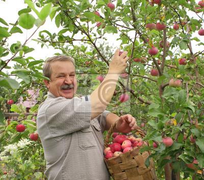 Ernte einen Apfel
