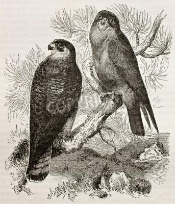 Bild Erstellt von Kretschmer und Jahrmargt, am Merveilles de la Nature, Bailliere et fils, Paris, 1878 veröffentlicht