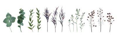 Bild Eukalyptus gesät, blauer agonis Thymian, Spargelbeerendesigner-Kunstaquarelllaub natürliche Niederlassungen verlässt die eingestellten Elemente, Sammlung. Dekorative schöne nette elegante Illustration