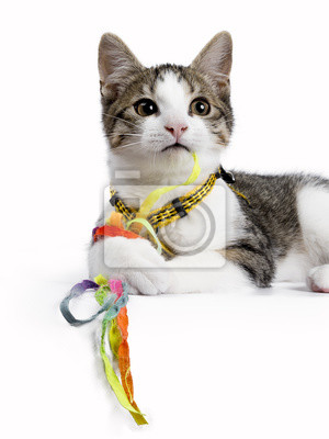 Europäische shorthair Kätzchen / Katze Verlegung auf weißem Hintergrund spielen mit bunten Saiten / Spielzeug