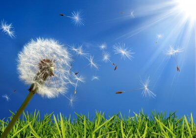 Bild exklusiv - Allergie-Konzept im Frühjahr