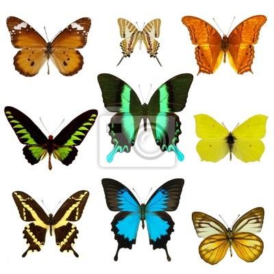Bild exotische Schmetterlinge Sammlung