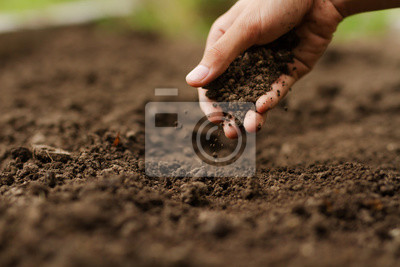 Bild Expert hand of farmer checking soil health before growth a seed of vegetable or plant seedling. Gardening technical, Agriculture concept.