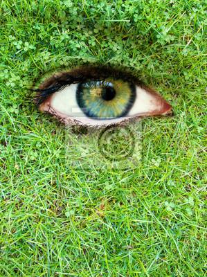 Eye in einer Wiese