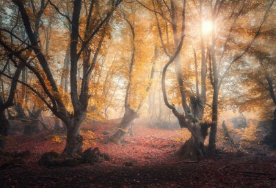 Fairy forest in fog at sunrise in autumn colors. Magical trees with sun rays. Colorful dreamy landscape with foggy forest, gold sunlight, red and orange leaves. Beautiful enchanted trees in mist. Fall
