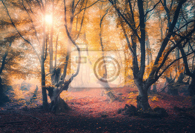 Fairy forest in fog at sunrise in autumn. Magical trees with sun rays. Colorful dreamy landscape with foggy forest, gold sunlight, red and orange leaves. Beautiful enchanted trees in mist. Fall colors