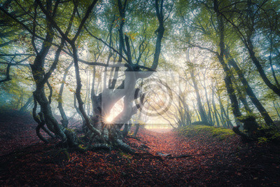Fairy forest in fog at sunrise in fall. Autumn colors. Magical old trees with sun rays. Colorful dreamy landscape with foggy forest, sunlight, red and yellow leaves. Beautiful enchanted trees in mist