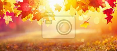 Bild Falling Autumn Maple Leaves Natural Background