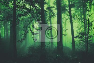 Fantasieschwarzgrün malte nebelige Waldbaumlandschaft der Märchen. Farbfiltereffekt verwendet.