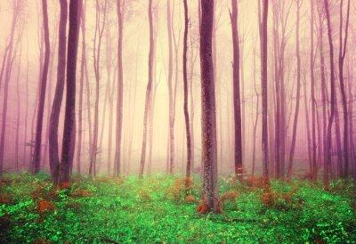 Bild Fantasiewald Bäume Hintergrund