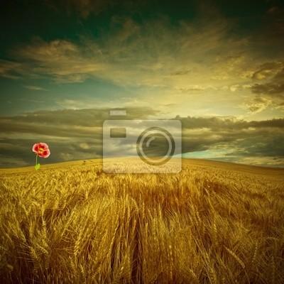 Bild fantastische Landschaft mit goldenen Feld und Mohnblüte